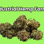 Industrial Hemp Farms Review
