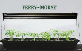 Ferry-Morse Review| Live Baby Plants and Flower Seeds for Home Gardening