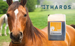 Tharos Review | Natural Feed Supplement for Horses and Pigeons