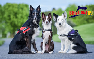 BRILLIANTK9 Review   Perfect Ergonomic Harness For All Dogs